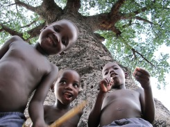 the kid playing under baobab tree
