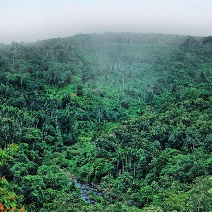 Hijau berundak tanah Aceh Utara