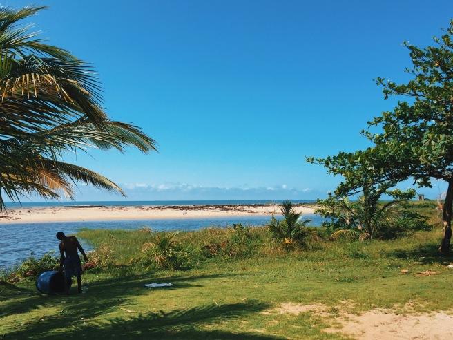 Debut ombak, pohon kelapa. Lukisan generik pantai dan lautan